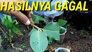 Video Cara Stek Pucuk Jambu Biji MP3, 3GP, MP4, WEBM, AVI, FLV Oktober 2018