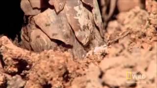 Странни животни - Панголин
