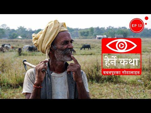(बबनपुरका गोठालाहरु - हेर्ने कथा अंक १३ - Babanpurka Gothalaharu - Herne Katha Episode 13 - Duration: 28 minutes.)