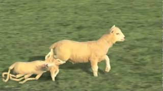 Baaa!! « Funny Videos, Funny YouTube Videos, Best Videos, Top Videos, Today On 12vid Com