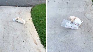 puppynewspaper