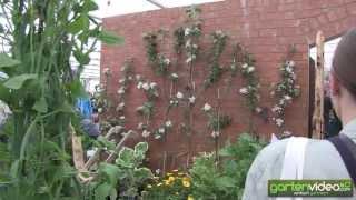 #1265 Chelsea 2013 - Frucht und Gemüse an der Chelsea Flower Show