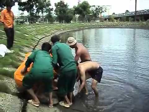 Bắt được cá huyết long khủng tại chân cầu Sài Gòn, gần đoạn Nguyễn Hữu Cảnh.