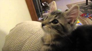 Cada vez se ven mas cosas raras en este mundo, ahora es un gato que hace como cabrajajaja muy charro