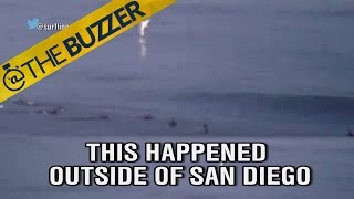 A great white shark jumped out of the ocean near some surfers and it scared us to death by @The Buzzer