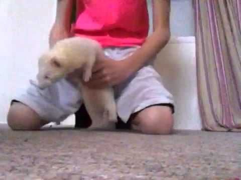 My ferrets (review)
