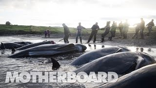 Video The Grind: Whaling in the Faroe Islands (Full Length) MP3, 3GP, MP4, WEBM, AVI, FLV Agustus 2018