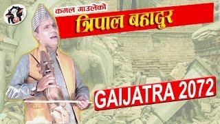 Kamal Gauley || Gai Jatra || Tripal Bahadur || त्रिपाल बहादुर