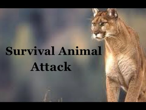 Video Survival Skills 101: How to Survive an Animal Attack while Hiking or Camping! download in MP3, 3GP, MP4, WEBM, AVI, FLV January 2017