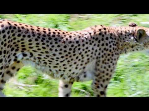 Zoo de La Boissière du Doré - Agence Valéry Joncheray