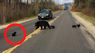 Driver That Spots A Bear Cub In The Road Notices One Alarming Detail by Did You Know Animals?