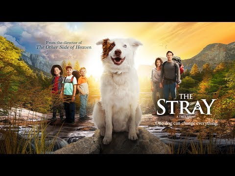 The Stray | Official Trailer
