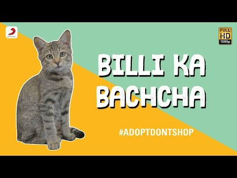 Billi Ka Bachcha - Ankur Tewari | Bachcha Party - Cute Kitten Video