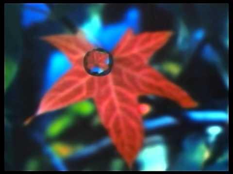 Lightning Seeds  -  Pure HD