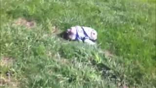 Sophie Rolls Down a Hill – English Bulldog Puppy