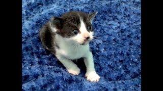 Holding Tiny Kittens Hack & Litter Box Training Begins - Nursery #19