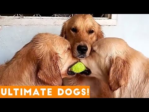 ULTIMATE FUNNIEST DOG & PUPPY Compilation Try Not to Laugh Challenge 2018 | Funny Pet Videos