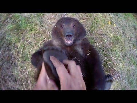 這男子不怕死地撓大黑熊的腳掌被大家認為根本是自殺,但下一秒卻出現激萌的畫面!