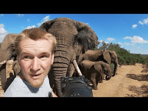 Photographer captures incredible encounter with a herd of elephants.