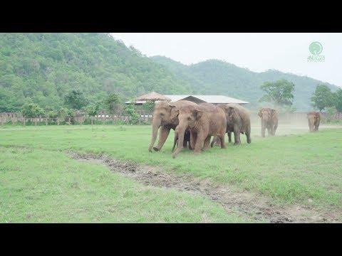 slonie-biegna-aby-powitac-nowonarodzone-sloniatko