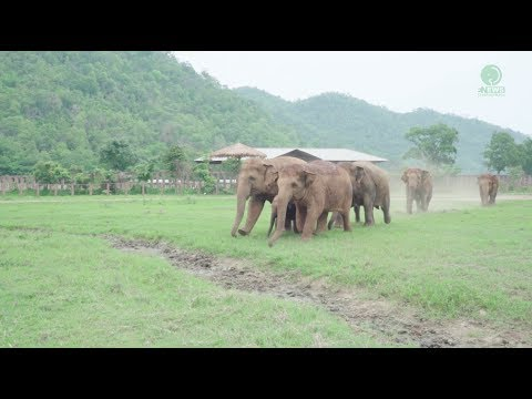 Elephants Run To Greeting A New Rescued Baby
