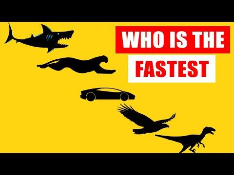 Speed Comparison: World's Fastest Animals