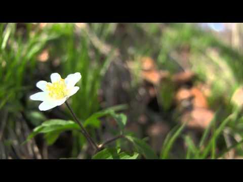 Las Wolski – Wiosna 2013