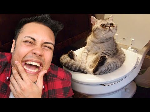 Funny cat videos - REACTING TO ANIMALS DOING FUNNY THINGS