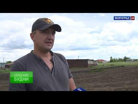 Руднянский район. Выпуск от 22.06.2017