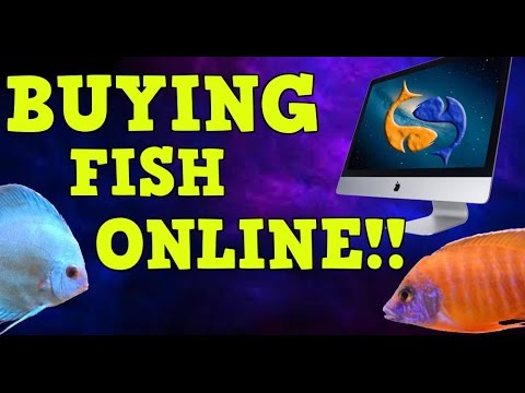Buying Fish Online! Everything You Need To Know! (GIVEAWAY CLOSED)