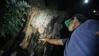 DO NOT TOUCH THIS TREE IT IS REPORTED THAT ANYONE WHO DOES SO DIES IN A WEEK OR 7 DAYS...This is the Devil Tree of New Jersey (Weird NJ) Support me for 100% FREE! http://gawkbox.com/mikeymanfs😃 SUBSCRIBE ► http://bit.ly/JOINTHELOCALS ★ PREVIOUS VIDEO ►https://www.youtube.com/watch?v=dcGC354_UpEMy second channel! https://www.youtube.com/channel/UC1FJGtvuzxU7Nq_mYiwxBsw★ TURN ON MY POST NOTIFICATIONS FOR SHOUTOUTS IN MY VLOG★---------------★FOLLOW MY SOCIAL MEDIA► (pls :)★MY INSTAGRAM► (@Mikeymanfs) http://instagram.com/mikeymanfsMY TWITTER► @Mikeymanfs) http://twitter.com/mikeymanfsMY FACEBOOK► https://www.facebook.com/mikeymanfsMY SNAPCHAT► mikeymanfss---------------★PO BOX!★Mike ManfrePO Box 25Bayville NJ 08721---------------★How to get a SHOUTOUT!★-Be SUBSCRIBED to my YouTube channel.-Take a screenshot of my page.-Post it on your Instagram.-Hashtag #MikeyManfs and tag me (@MikeyManfs) in the photo.----------------Outro music = Another Day in Paradise https://soundcloud.com/quinnxcii-----------------Ademir:https://www.youtube.com/channel/UCp5Lou0WVg28V5LhFt-rv2Q-----------------★A little about me★Hey Guys! Mikey Manfs here! A little about myself, I make awesome 24 Hour Challenge and Overnight Challenge videos! As well as hilarious and funny Walmart videos, 3 AM challenges! You want to see the funniest pranks on youtube? Hit that subscribe button! Really interesting and funny vlogs as well!
