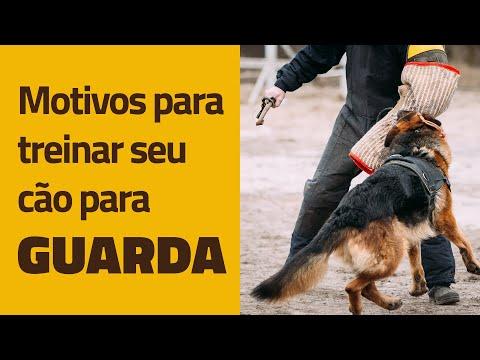 Video Principais motivos para treinar seu cão para GUARDA download in MP3, 3GP, MP4, WEBM, AVI, FLV January 2017