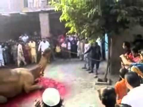Eid ul azha qurbani - Beautiful Qurbani.