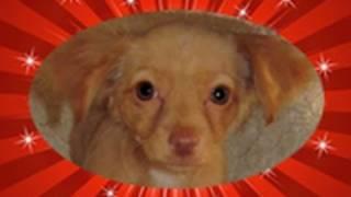 Marilyn FOUND a home  :-)  (video by Audrey & Eldad Hagar)