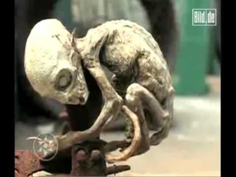 un cucciolo extra terrestre ritrovato in messico