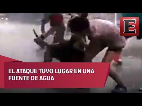 Perro pitbull muerde a niña cuando jugaba en Iztacalco
