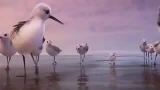 Nonton PiPer - So Cute Bird Film Subtitle Indonesia Streaming Movie Download