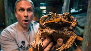 THIS TOAD IS A KILLER!! SERIOUSLY A KILLER!! | BRIAN BARCZYK by Brian Barczyk