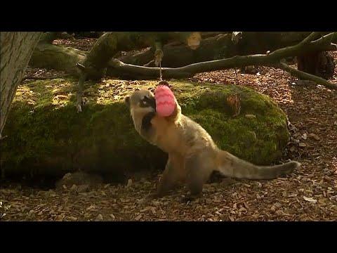 London/Großbritannien: Die Zoo-Tiere im Zoo ZSL feiern  ...