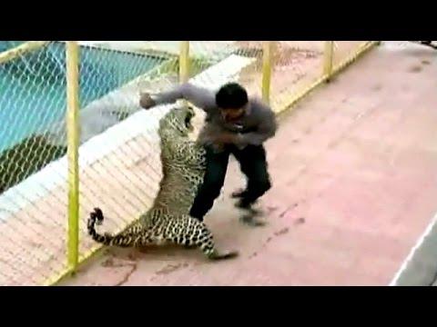 (VÍDEO) Leopardo invade escola e fere seis pessoas na Índia Batalha para capturar animal durou quase 10 horas; invasão de habitats naturais pelo homem motiva trânsito de felinos selvagens por áreas urbanas