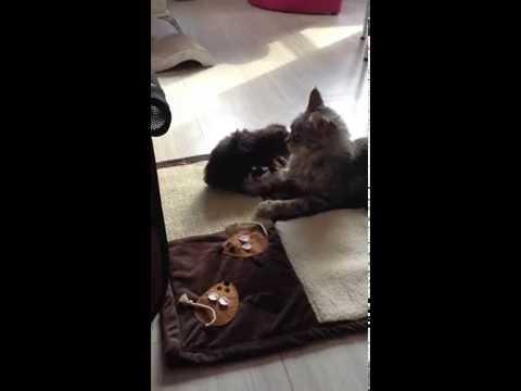 On ne mord pas maman (видео)