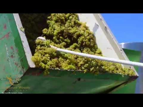 Harvest 2015 - South Coast Winery Resort & Spa in Temecula, CA