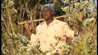 Kasahun Taye (shemlu Wayera Nawe)