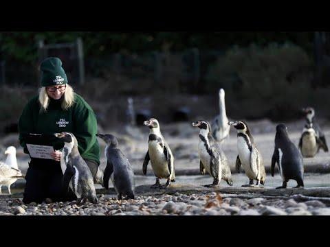 London/Großbritannien: Zoo London (ZSL) - Sind denn a ...