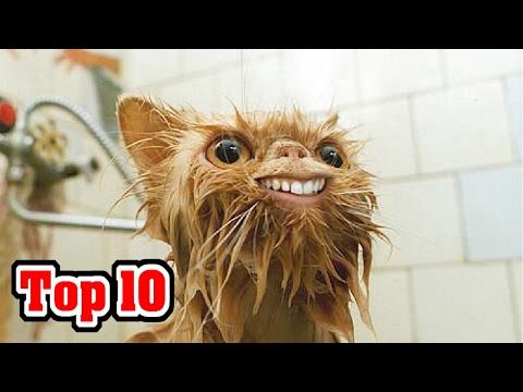 Top 10 RAREST Cat Breeds видео