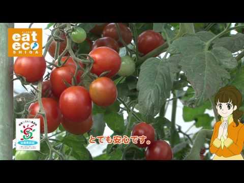「食べることで、びわ湖を守る。」 ~滋賀県環境こだわり農産物~