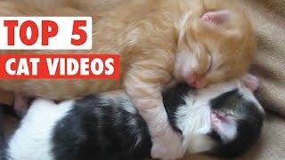 animale faze pisici Martie