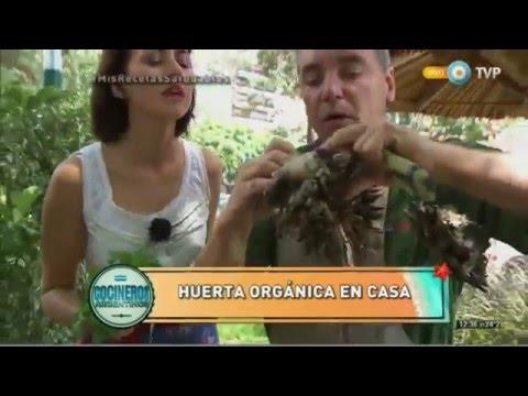 Huerta orgánica y gallinero en casa