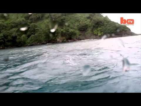 Ataque de tres ballenas asesinas a un tiburón