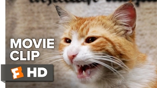 Nonton Kedi Movie CLIP - Cat Fight (2017) - Documentary Film Subtitle Indonesia Streaming Movie Download